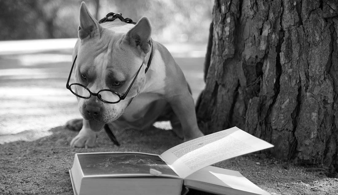 grayscale_photo_of_short_coated_dog_sitting_on_rock-scopio-277f582e-c519-4f41-a2f8-5240613a46cd-1100